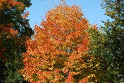 Click to view album: Fall at St. Joseph